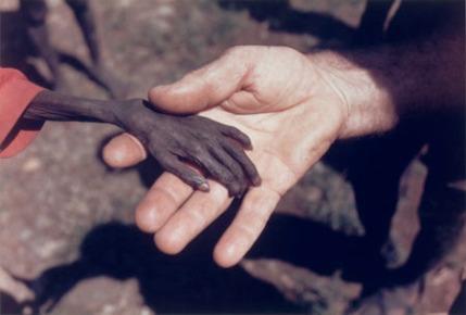 starving-hand-2.jpg